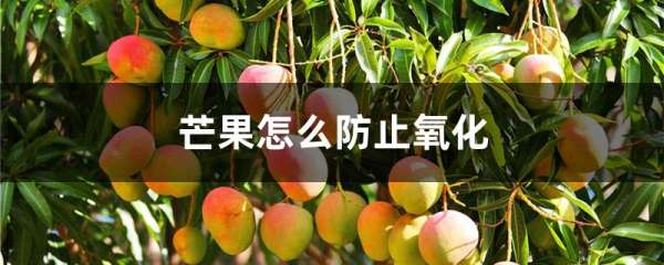 芒果怎么防止氧化