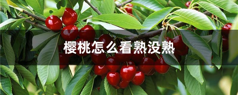 樱桃怎么看熟没熟